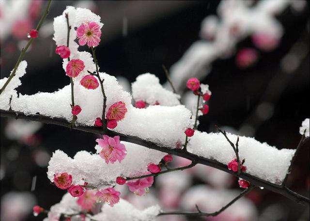 【古代形容女子的诗句】古代形容天气寒冷的诗句